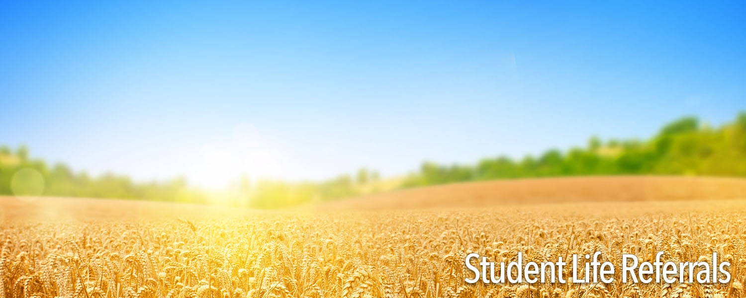 wheat field with bright sun
